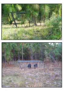Trapping Wild Boar and Hog With Push Gates