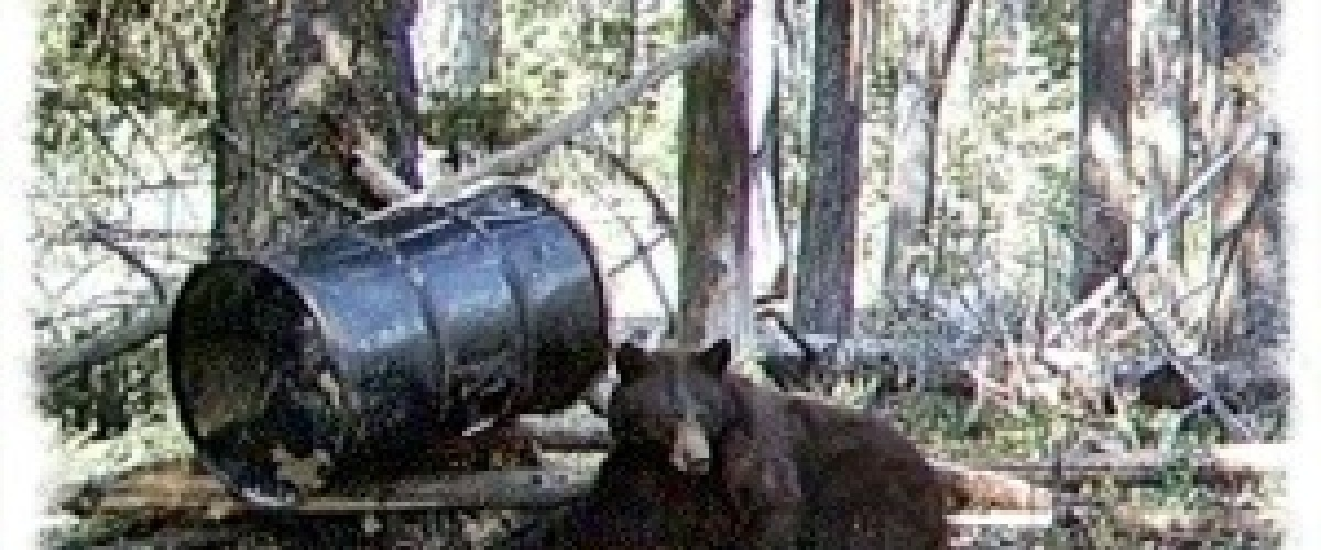 Baiting bears and types of bears