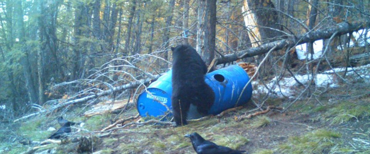 Bear Hunting for beginners